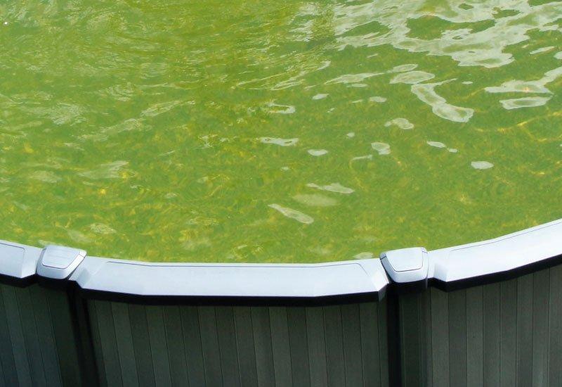 Eau verte dans une piscine hors-sol